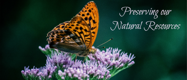 Butterfly and Preservation
